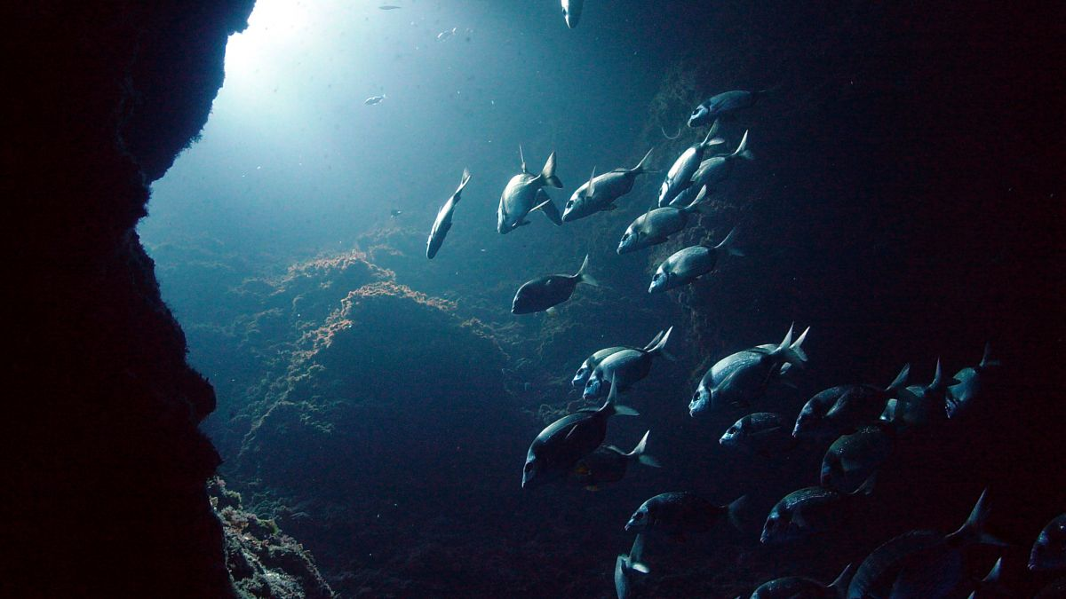 Les Illes Medes, reserva natural