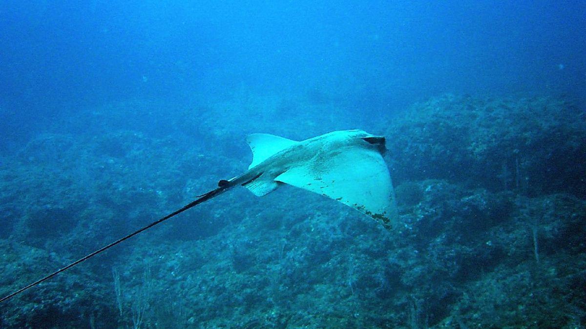 Àrea protegida de les Illes Medes