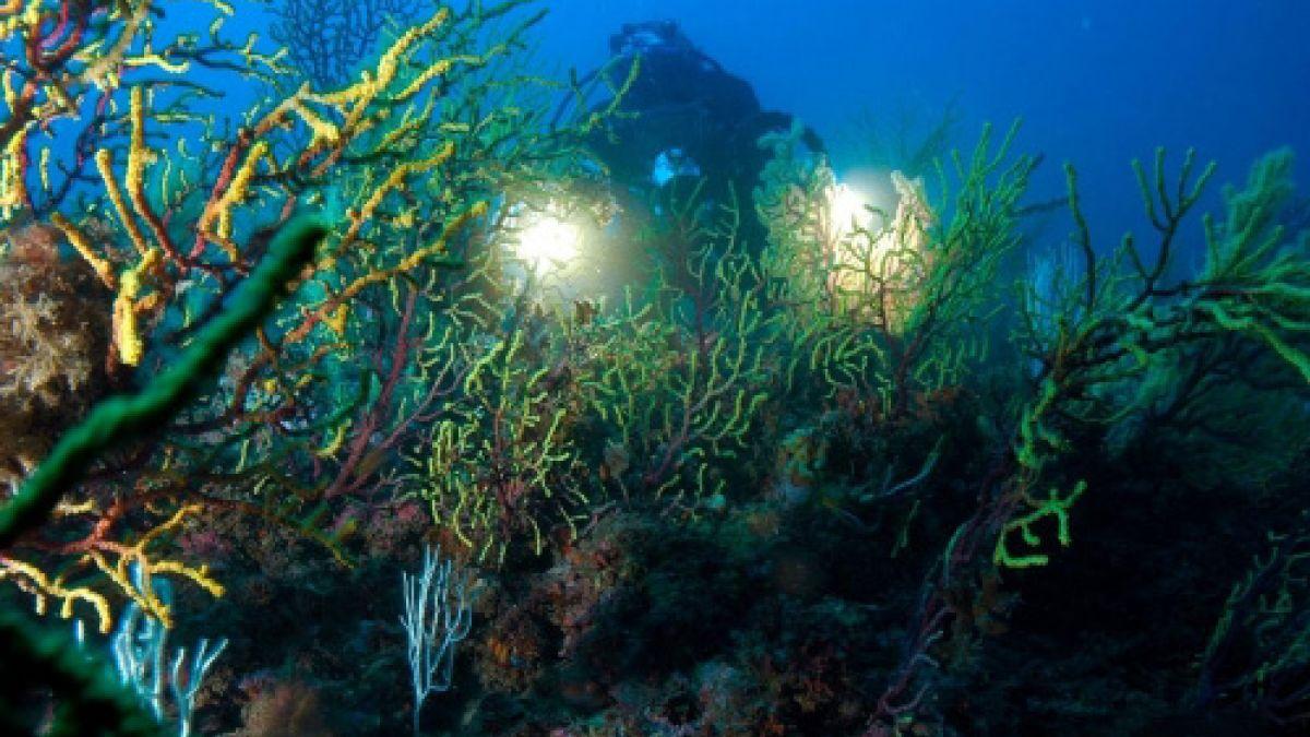 buzo/diver/plongeur