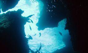 Dofí Nord