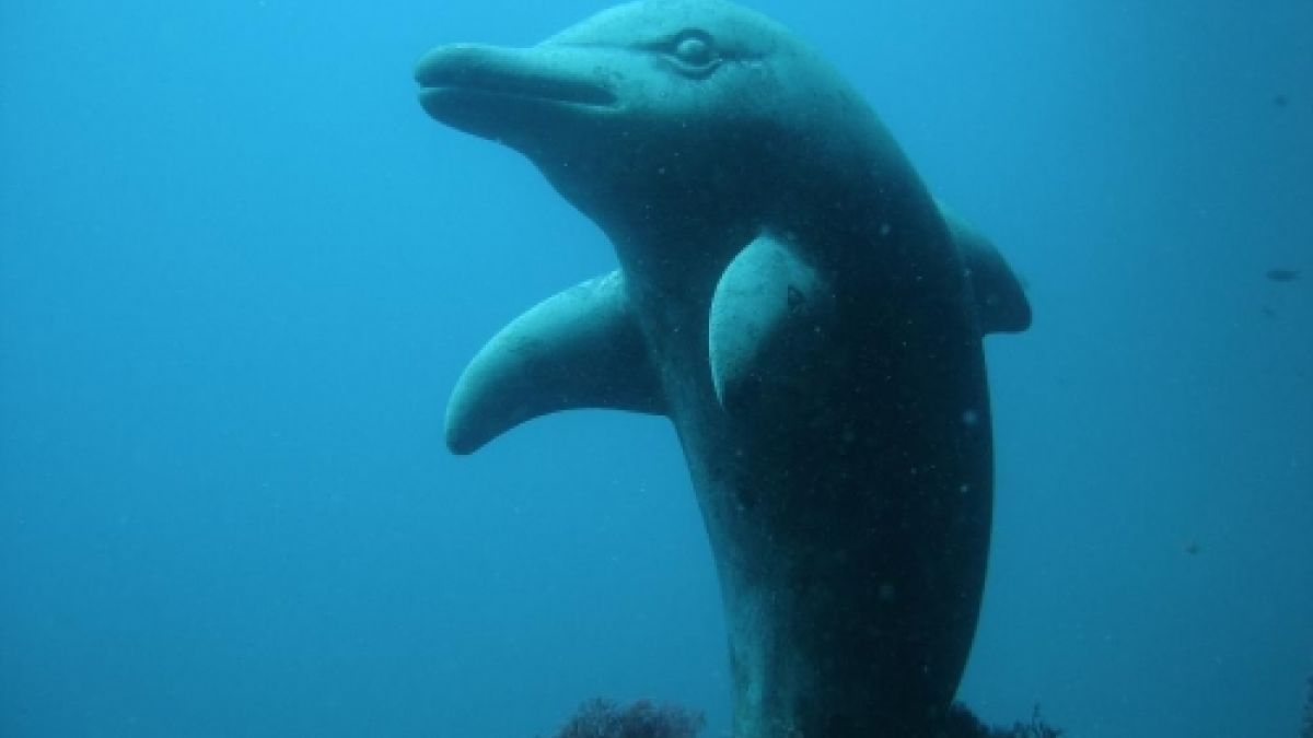 delfin/dofi/delphin/dauphin